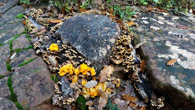 Setas y musgo que crecen sobre las rocas fotografía de archivo libre de regalías