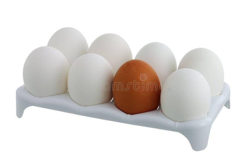 Sete ovos brancos e um marrom na caixa foto de stock royalty free