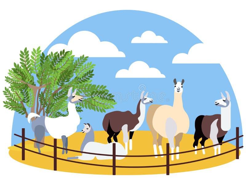 Seth, lama d'animaux affermage En trame plate de bande dessinée minimaliste de style illustration stock