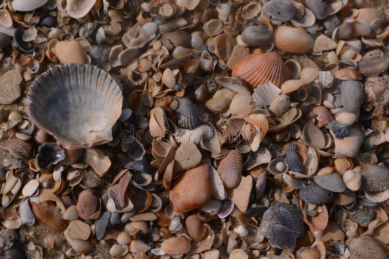 Setki denne skorupy na piaskowatej plaży obraz stock