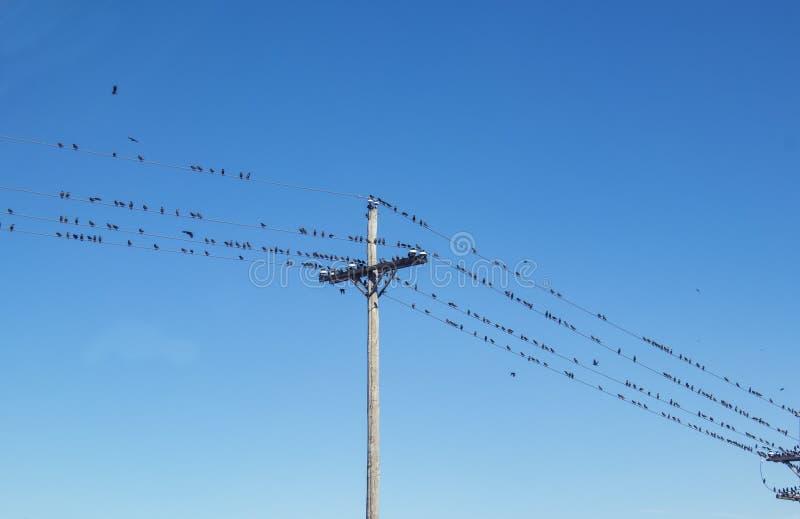 Setki ptaki umieszczali na telefonicznym drucie przeciw niebieskiemu niebu obraz royalty free