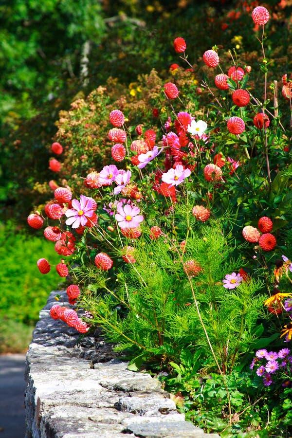 Seto de flores rojas y rosadas fotografía de archivo