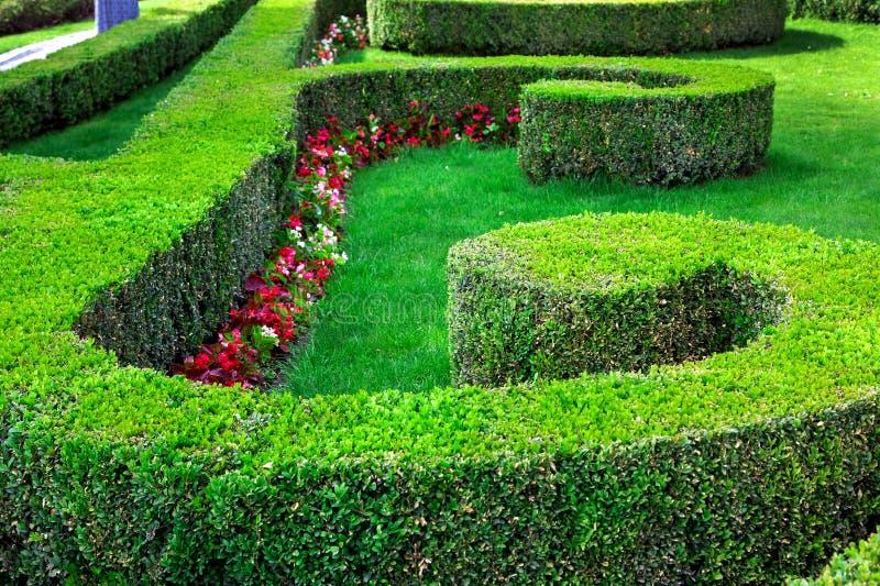 Seto del boj con los arbustos acortados plantados en un modelo imagen de archivo