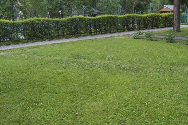 Seto a lo largo de la trayectoria y césped con la hierba verde en el parque, visiones escénicas en el parque de la ciudad en vera fotos de archivo libres de regalías