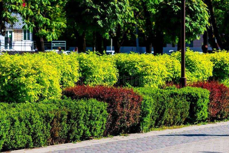 Setos coloridos en el parque de la ciudad imagenes de archivo