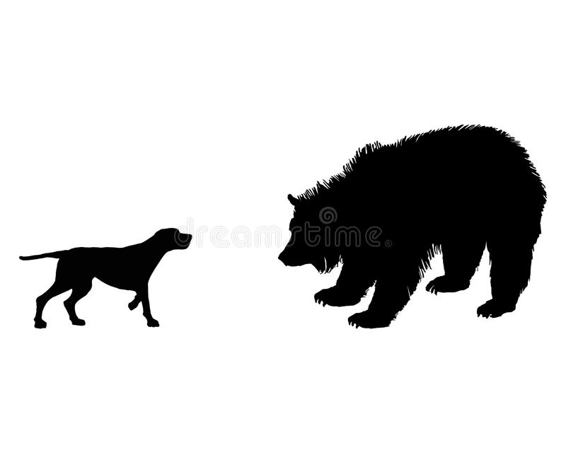 Setter And Grizzly Bear Meet Face To Face Stock Photo