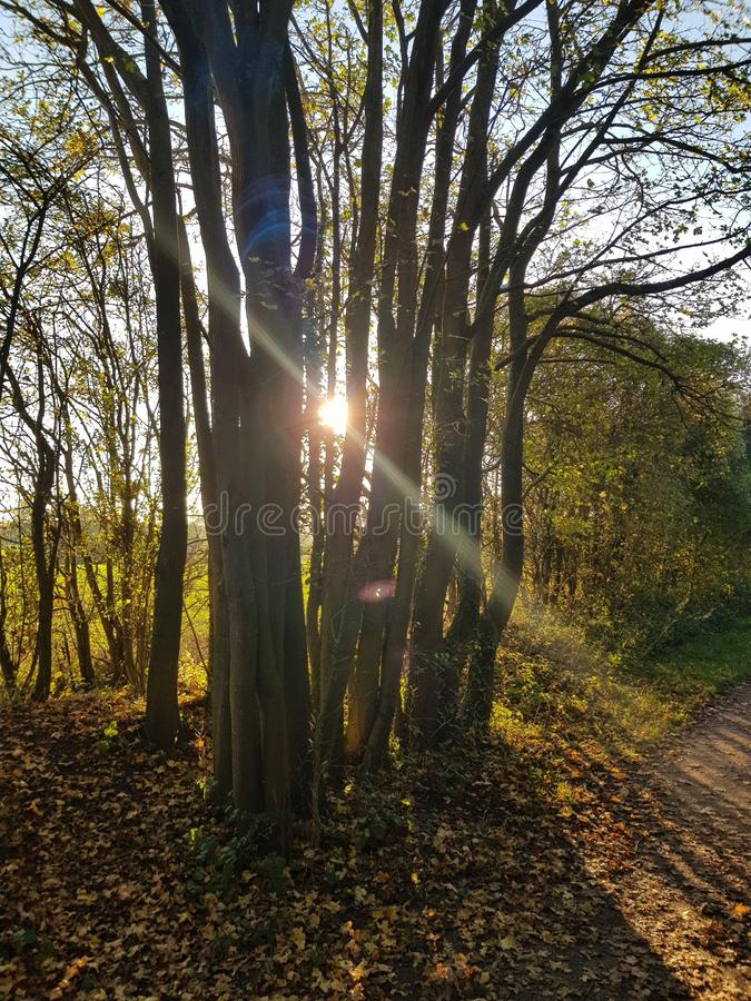 Sun peeks through trees. The setting sun peeks through the trees letting us know it has a golden ray left or two royalty free stock photo