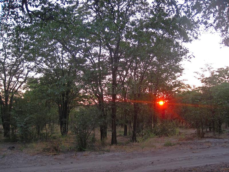 SETTING SUN SEEN THROUGH THE AFRICAN BUSH royalty free stock image