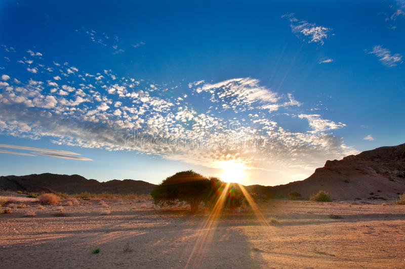 Setting sun tree in desert. Sun with rays behind a shepherd tree in the Ai-Ais Richtersveld Transfrontier Park in South Africa stock photos