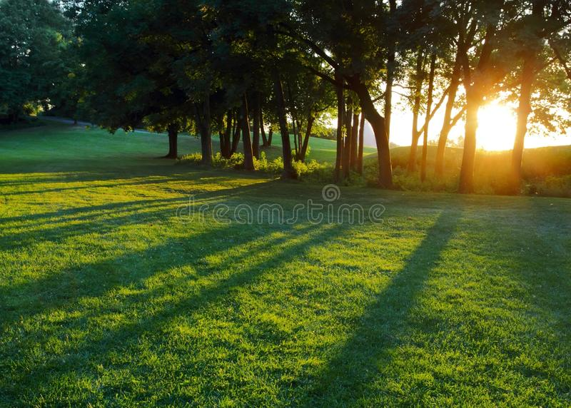 Download Setting Sun Between Trees Horizontal Stock Image - Image: 26303945
