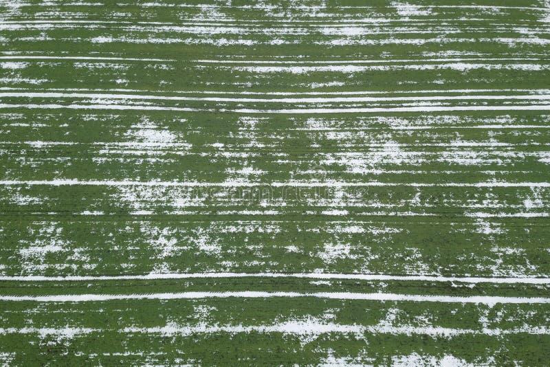 Settore di grano coperto di neve Vista superiore di tempo di primavera immagini stock libere da diritti