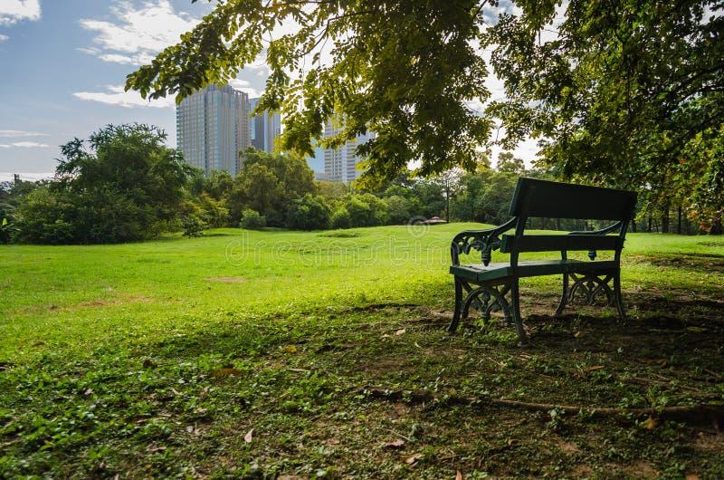 Setzen Sie öffentlich Park mit Schatten des grünen Baums und des Rasens auf die Bank lizenzfreie stockbilder
