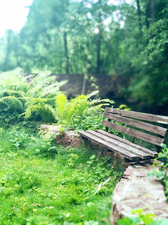Setzen Sie im Holz nahe des See- und Farnbusches herum auf die Bank Holzbank auf Steingrenze mit Farn und grünem Gras Sommerabend lizenzfreies stockbild