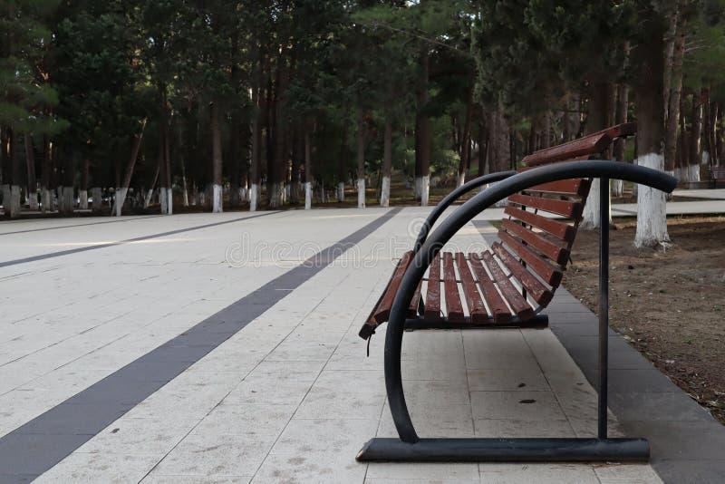 Setzen Sie im Sommerpark mit alten Bäumen und Fußweg auf die Bank lizenzfreie stockfotos
