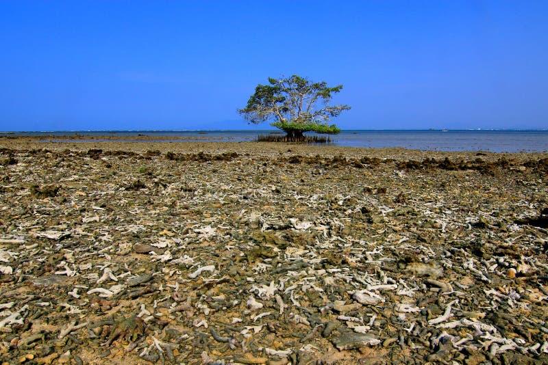 Setzen Sie mit defekter Koralle und Baum allein in Pulau Gede, Rembang, Indonesien auf den Strand stockbild