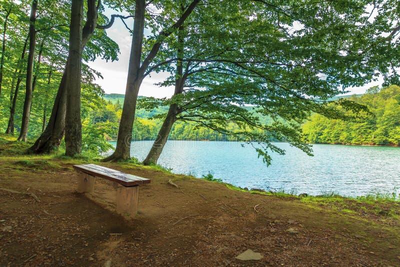 Setzen Sie nahe im Wald auf dem Ufergebirgssee auf die Bank lizenzfreie stockfotos