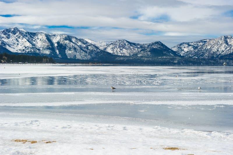Setzen Sie Seeblick in der Wintersaison mit Schnee und Vögeln auf den Strand stockbilder