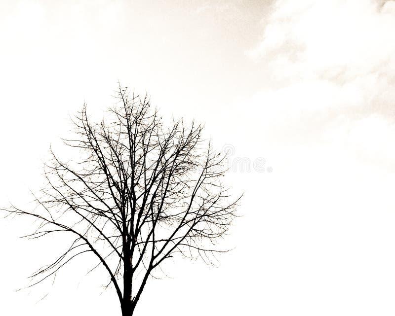 Download Seul arbre image stock. Image du nuages, taillez, oriental - 83447