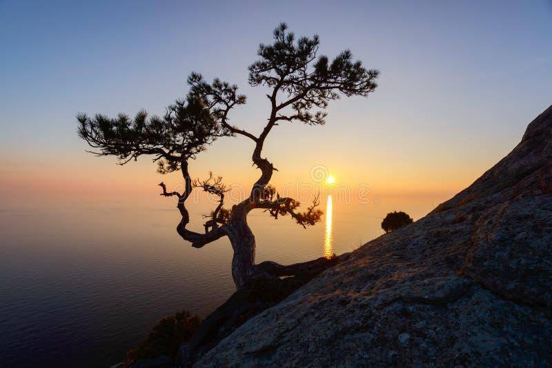Seul arbre au bord de la falaise images stock
