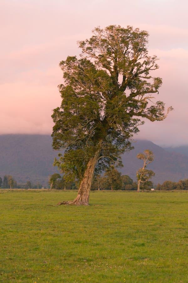 Seul arbre au-dessus de verre vert avec l'état de pente image libre de droits