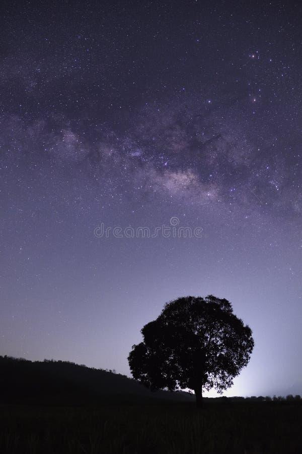 Seul arbre avec la manière laiteuse, galaxie photographie stock
