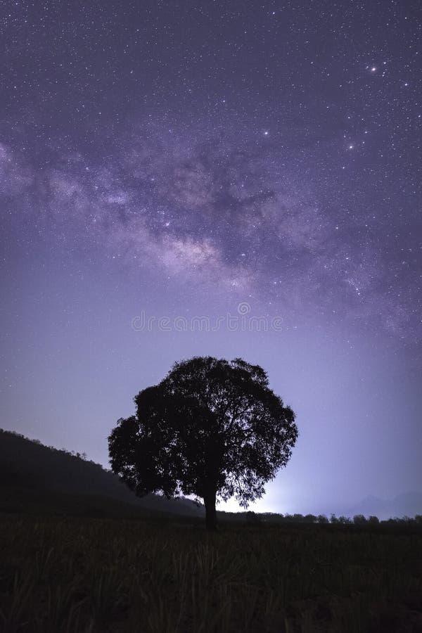 Seul arbre avec la manière laiteuse, galaxie images stock