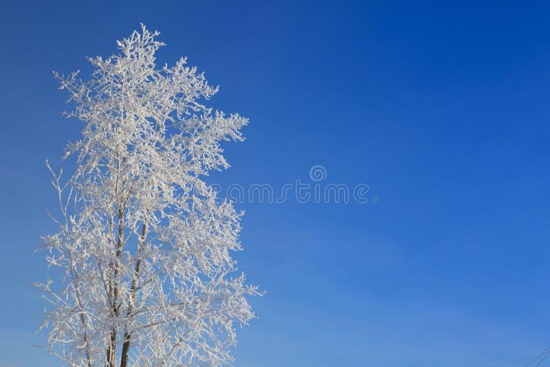 Seul arbre congelé sur le champ d'hiver image libre de droits