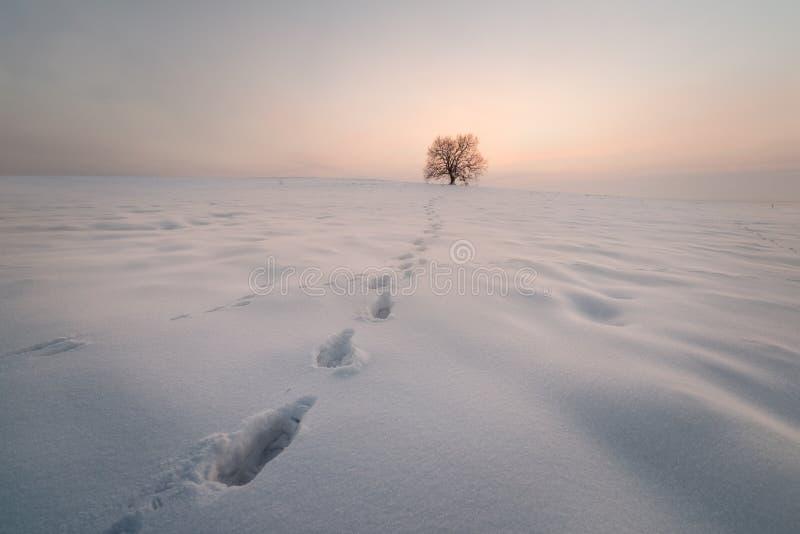 Seul arbre dans un domaine au coucher du soleil, saison d'hiver image stock