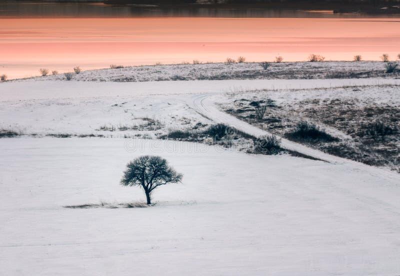 Seul arbre dans un domaine au coucher du soleil, saison d'hiver images libres de droits