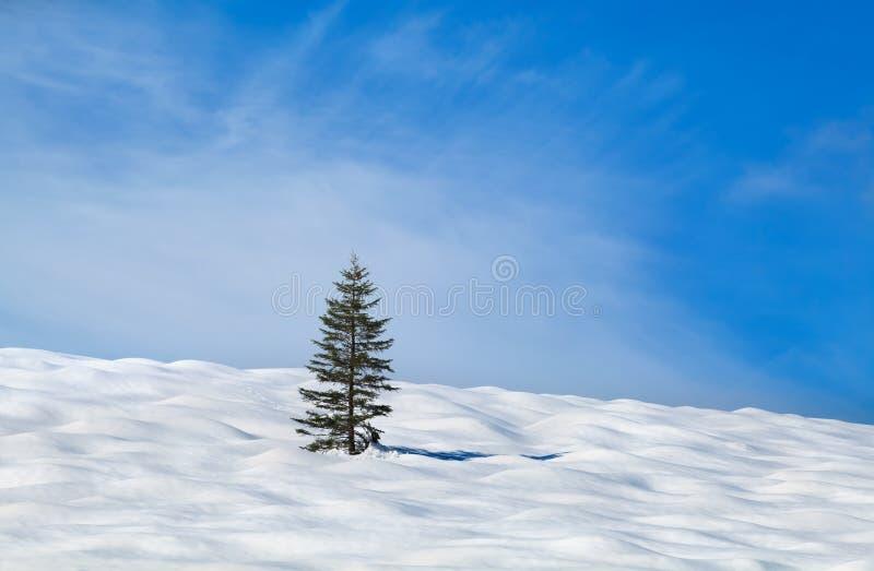 Seul arbre impeccable sur le pré de neige image stock