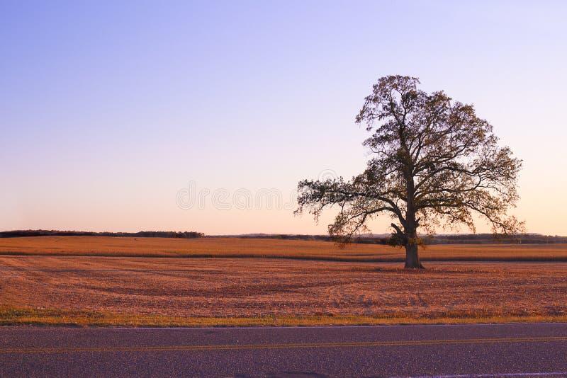 Seul arbre simple sur le paysage de pays photos libres de droits