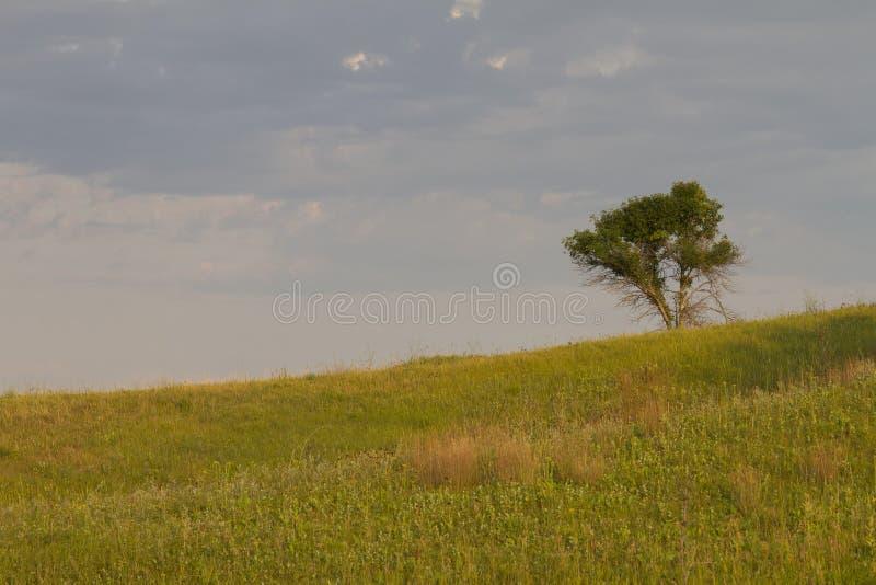 Seul arbre sur la prairie image stock