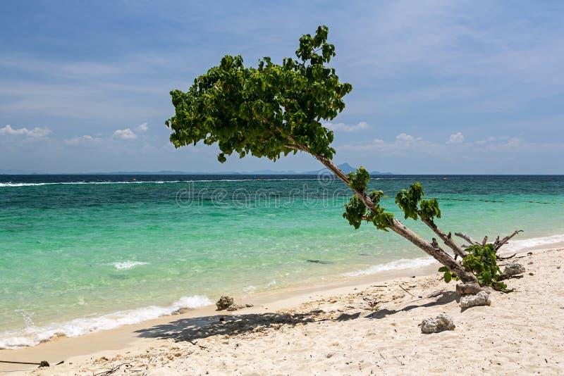 Seul arbre sur le littoral de l'île de Poda dans Krabi images libres de droits