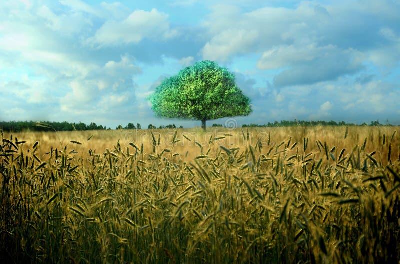 Seul arbre vert, ciel bleu et champ jaune images stock