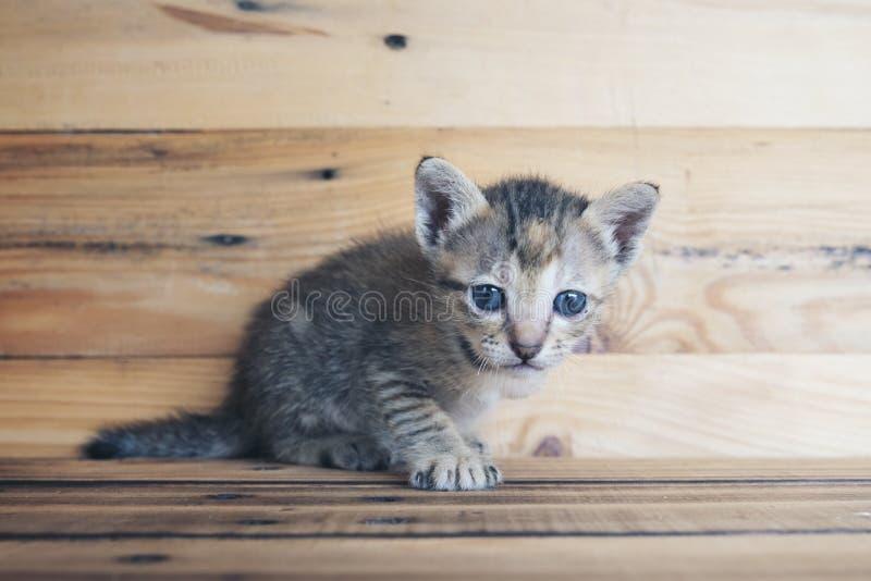 Seul chaton minuscule avec du bois image libre de droits