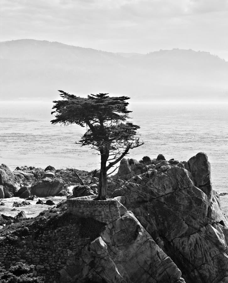 Seul Cypress chez Pebble Beach images libres de droits