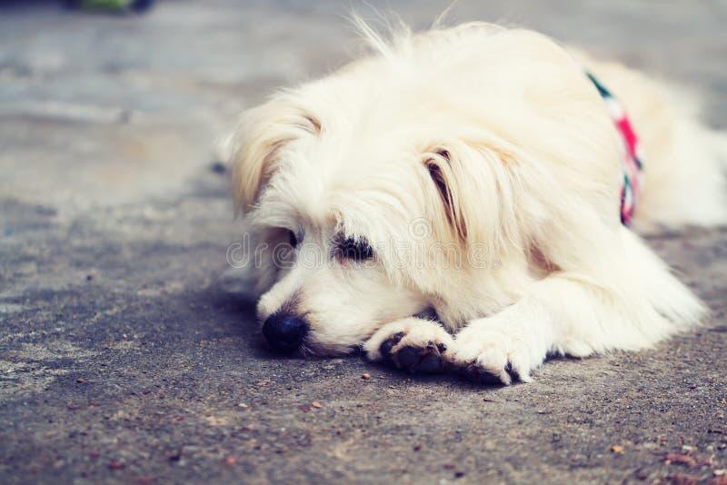 Seul isolé de chien image stock