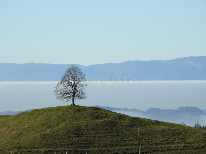 Download Seul l'arbre image stock. Image du seulement, brumeux - 87705461