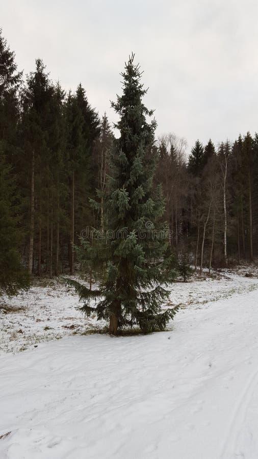 Seul l'arbre, le forrest est derrière lui photographie stock