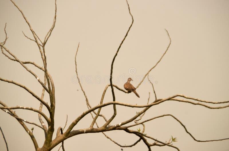 Seul oiseau image stock