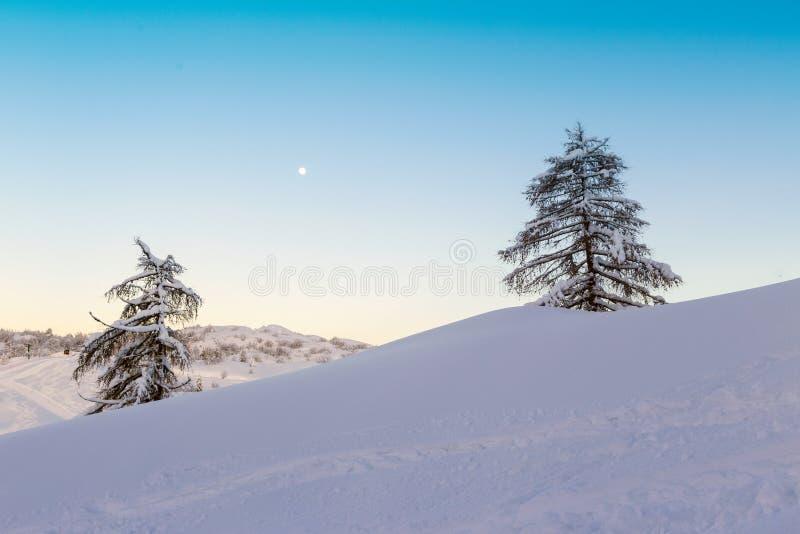 Seul sapin deux dans le paysage d'hiver photographie stock libre de droits