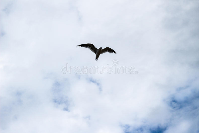 Seul vol d'oiseau de mouette sur le ciel bleu nuageux photographie stock libre de droits