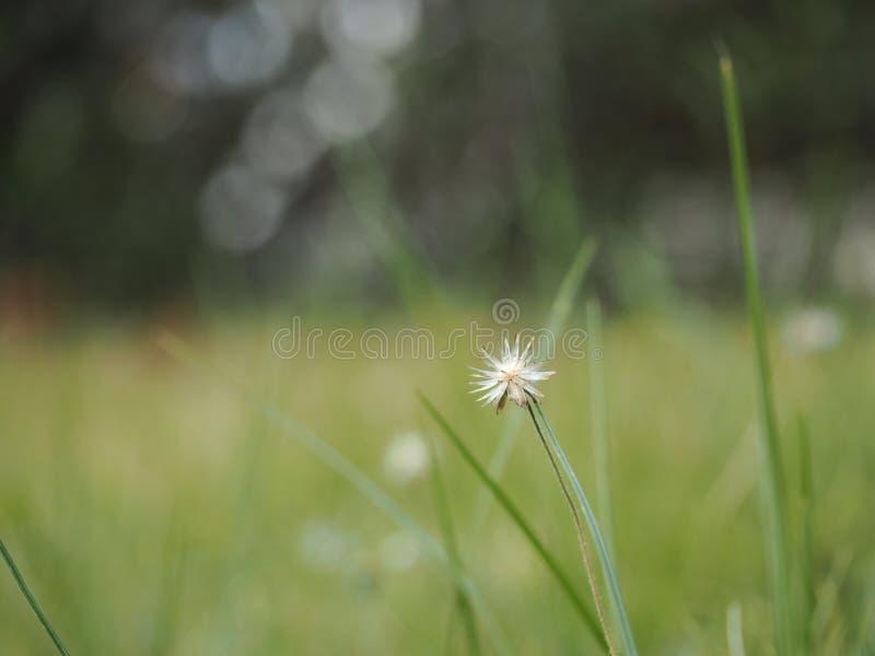 Seule fleur image libre de droits