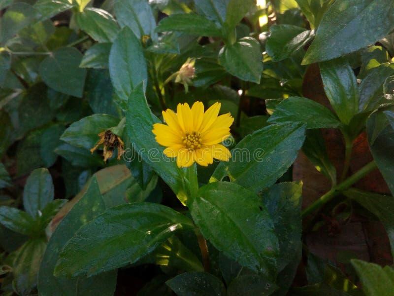 Seule fleur images stock
