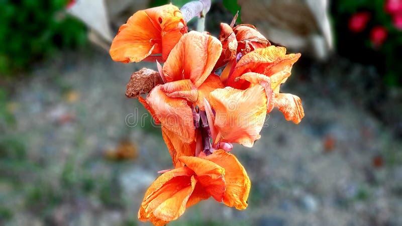 Seule fleur presque photo stock