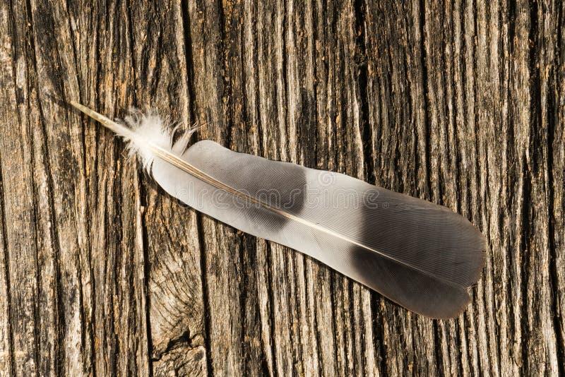 Seule plume dans la nature images stock