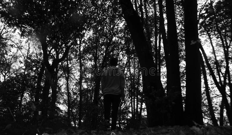 Seulement dans les bois photographie stock