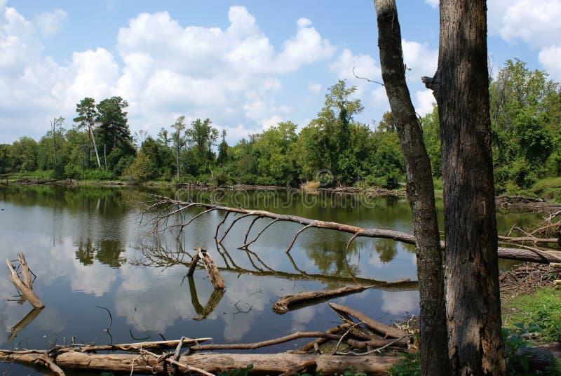 Seuls lacs star photo libre de droits