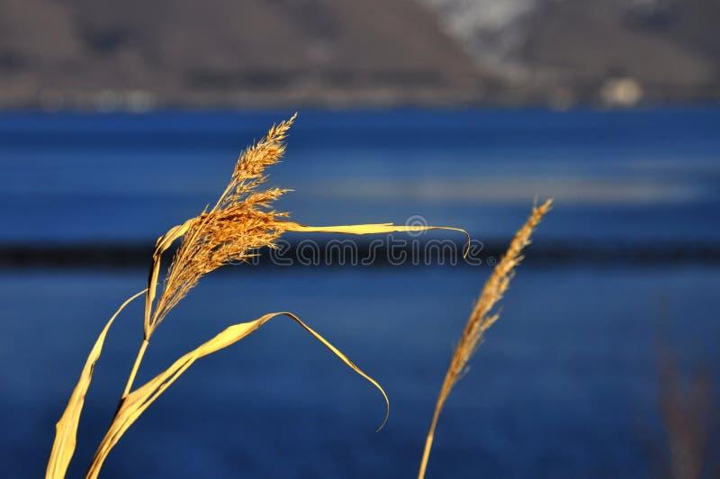 sevan的湖 库存照片