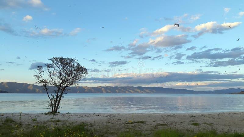 Sevan See und Baum stockbilder